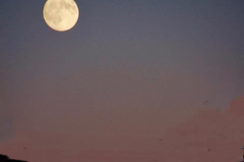Moon Over Fair